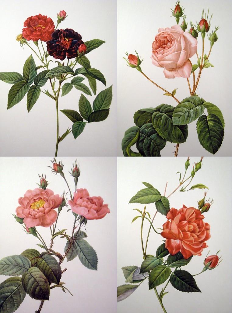 Vintage Redoute Rose Prints
