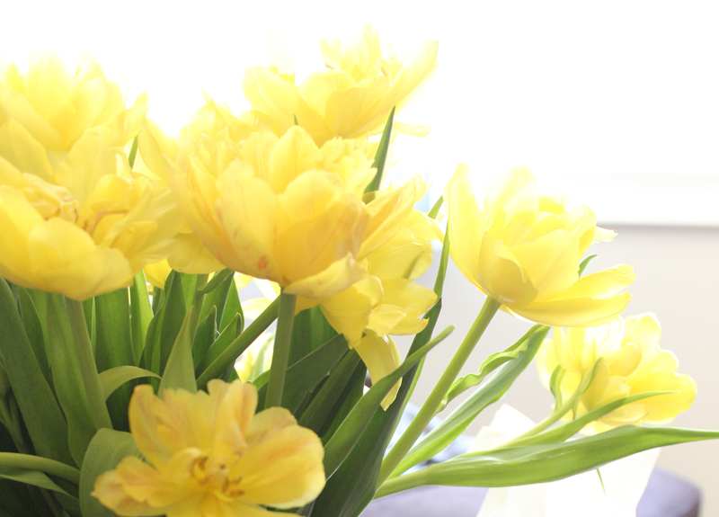 Sunshine and tulips